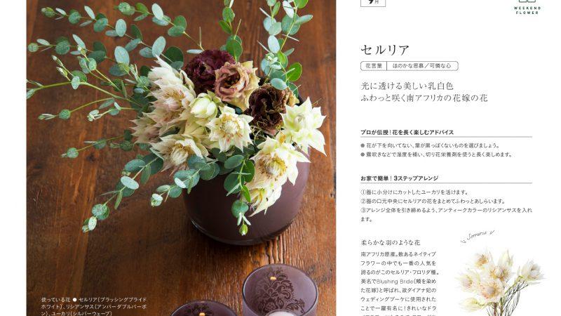 【9月セルリア】花のある週末を【WEEKEND FLOWER】