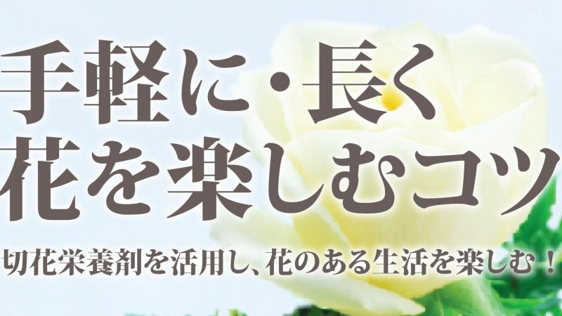 手軽に!長く! お花を楽しむコツ