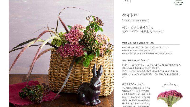 【9月ケイトウ】花のある週末を【WEEKEND FLOWER】