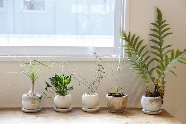 観葉植物で心地の良い生活を