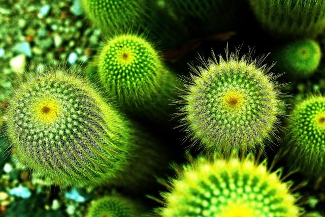 サボテン・多肉植物は夜間もCO2を吸収