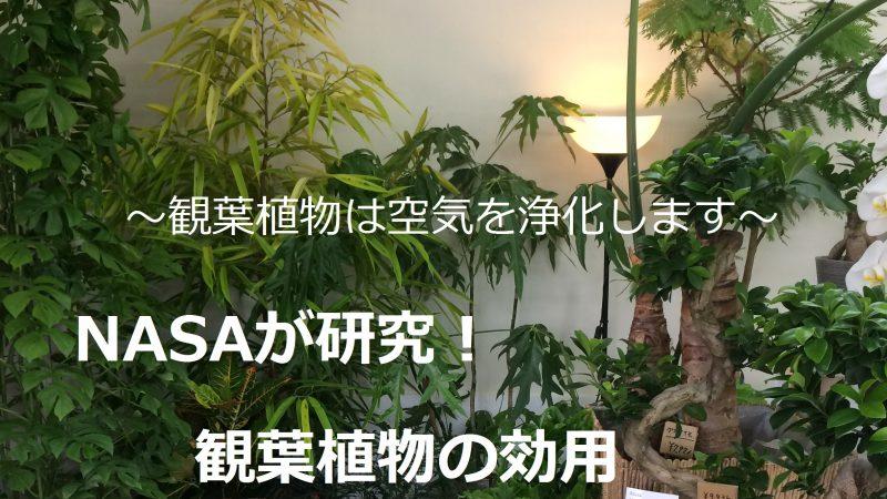 観葉植物でお部屋の空気をきれいに - エコ・プラントの効果とおすすめ品種
