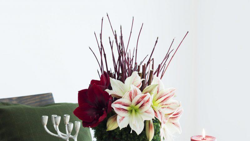【12月 アマリリス】花のある週末を ~WEEKEND FLOWER~