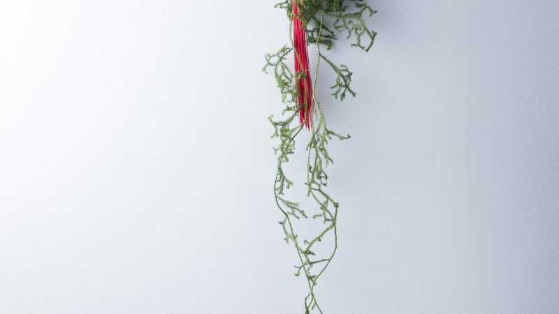【12月 ミディ胡蝶蘭】花のある週末を ~WEEKEND FLOWER~