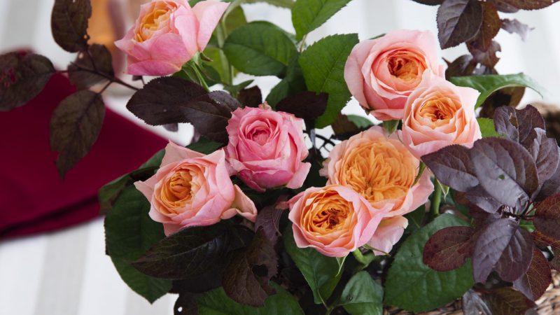 【11月 バラ】花のある週末を ~WEEKEND FLOWER~